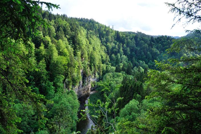 FSC und PEFC bieten ein Zertifizierungssystem für nachhaltige Forstwirtschaft. Wir stellen die Organisationen und ihre Label auf blog.papierdirekt.de vor. Bild: © FSC®