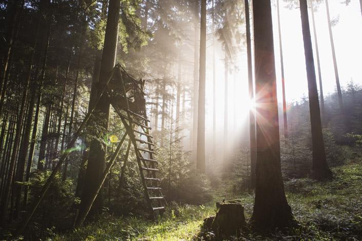 FSC und PEFC bieten ein Zertifizierungssystem für nachhaltige Forstwirtschaft. Wir stellen die Organisationen und ihre Label auf blog.papierdirekt.de vor. Bildquelle: © PEFC Deutschland