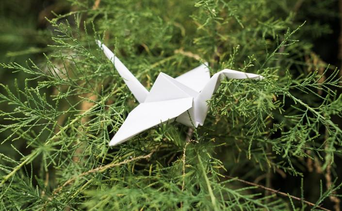 Mit Geduld und Gefühl wird beim Origami auf engstem Raum Kreativität ausgelebt.Hier zeigen wir Figuren zum nachfalten, und die Werke der Origami-Meister.