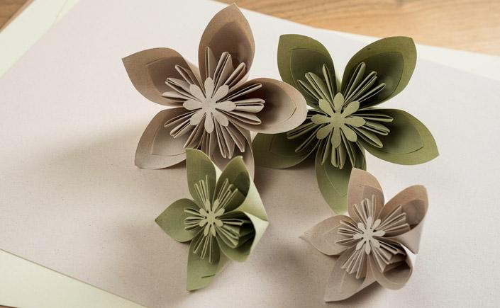7 Papiere für Floristen ist unsere Empfehlung für alle Blumenläden. Schöne Papiere für schönen Blumen, genauso wie praktische Helfer für Ihr Blumengeschäft.