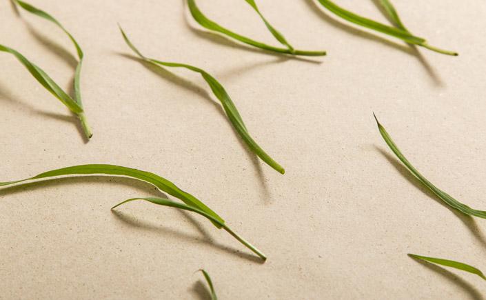 Graspapier mit feiner Struktur und natürlichem Charakter
