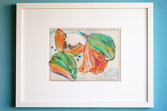 Botanical Drawing - Motiv Papaya von Elke Hanisch