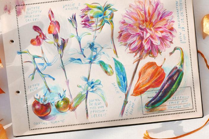 Botanische Zeichnugen verschiedener Balkonblumen und Pflanzen