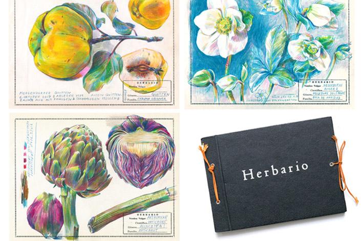 Projekt herbario mit botanischen Zeichnungen von Elke Hanisch