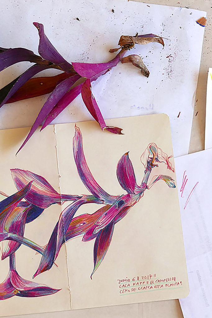 Botanical Drawing von Elke Hanisch und natürliche Vorlage im Vergleich