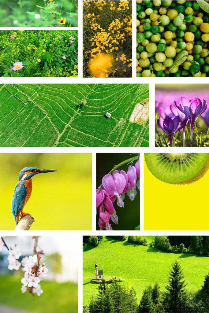 Moodboard verschiedener grüner Impressionen rund um Colorplan Chartreuse im Frühling