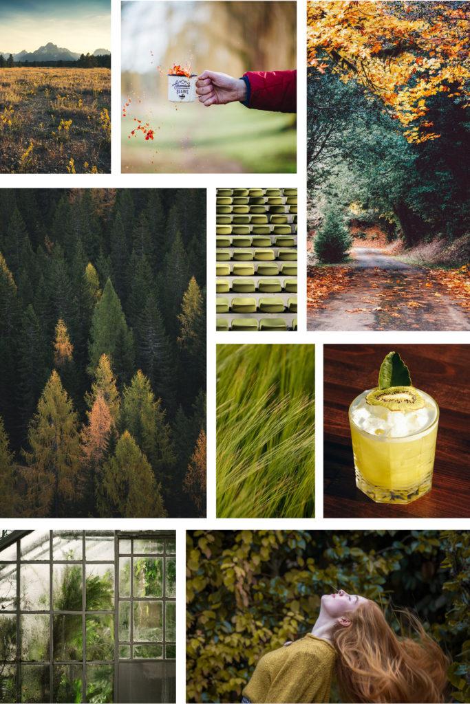 Herbst Moodboard zu den Colorplan Kiwigrün Farbpaletten von Papier Direkt
